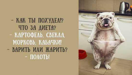Смешные фото с надписями о диете