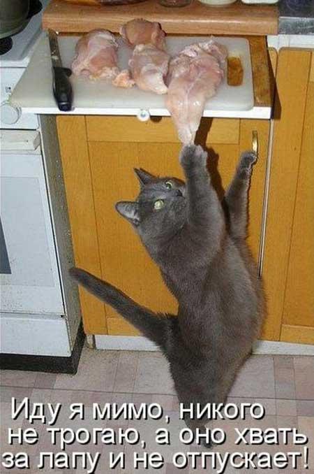Коты и еда - фото приколы