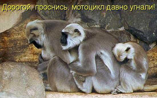 Смешные обезьянки - картинки с надписями