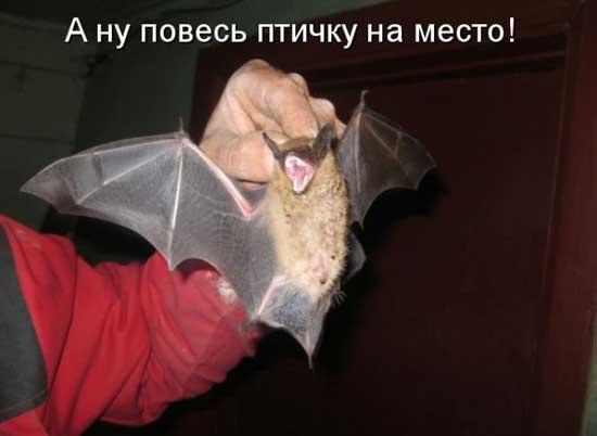 Смешные фото с животными и надписями