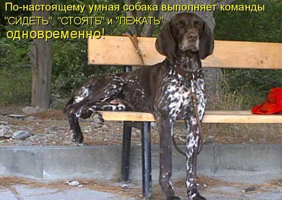 Смешные фотки собак с надписями