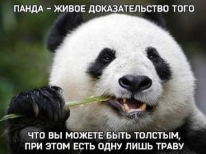 Прикольные высказывания о пандах