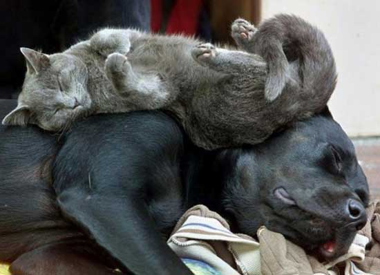 Смешные спящие животные