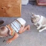 Смешные фотки с животными и детьми