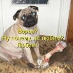 Смешные собаки — фото с надписями