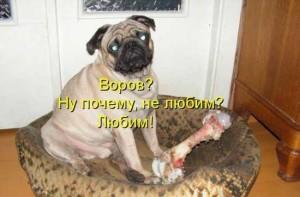 Смешные собаки - фото с надписями