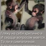 Картинки с обезьянками со смешными надписями