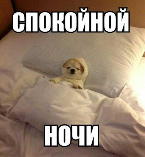 Смешные картинки спокойной ночи