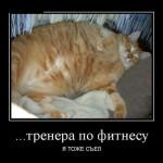 Фото приколы про толстых котов